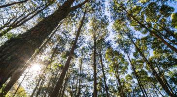 mets-puud