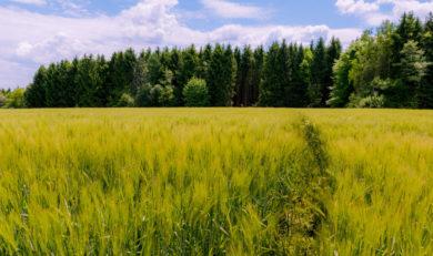 Как купить землю в эстонии аппартаменты в минске