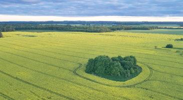 põllumaa-rent-ost