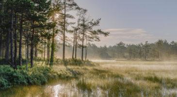looduskaitselised-alad-maa-mets-pold