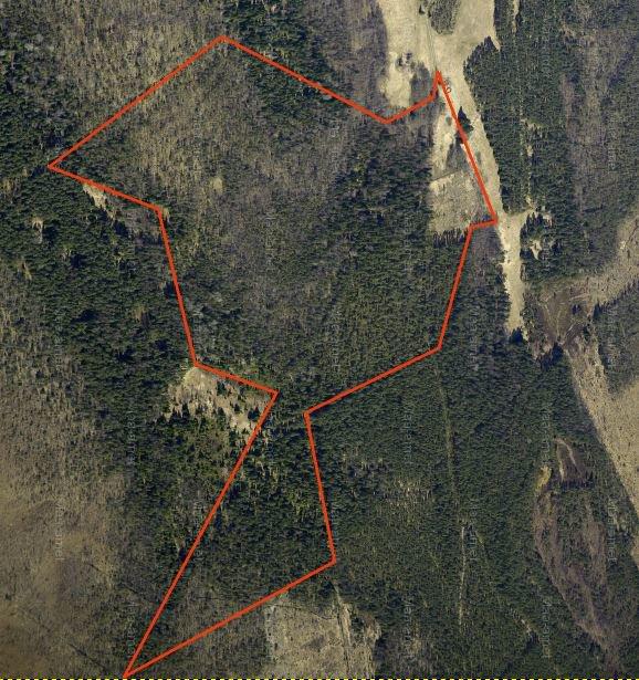 Große Waldfläche in Hiiumaa