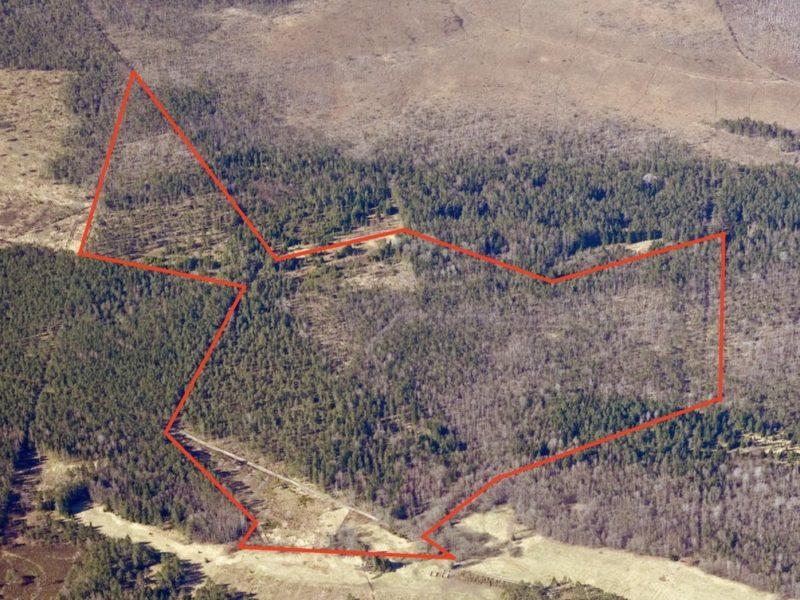 Forest land in Hiiumaa