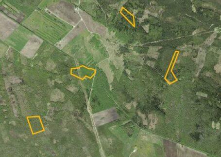 25 hektarit metsamaad!