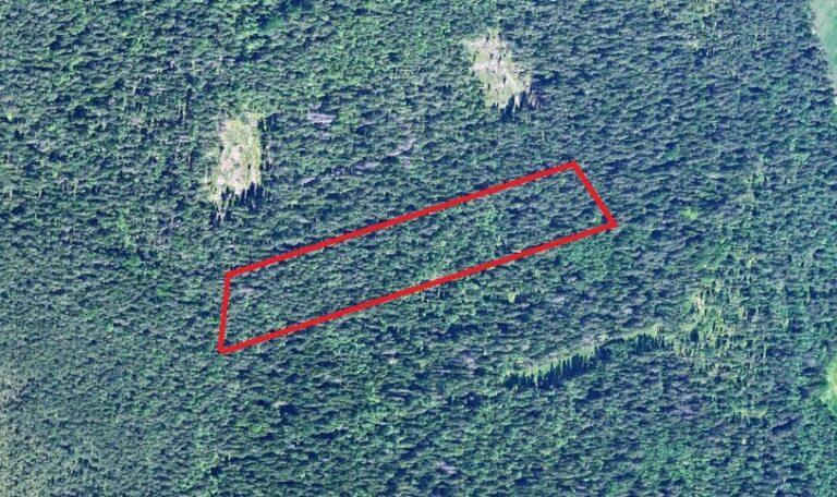 Waldflächen in Nationalpark Lahemaa